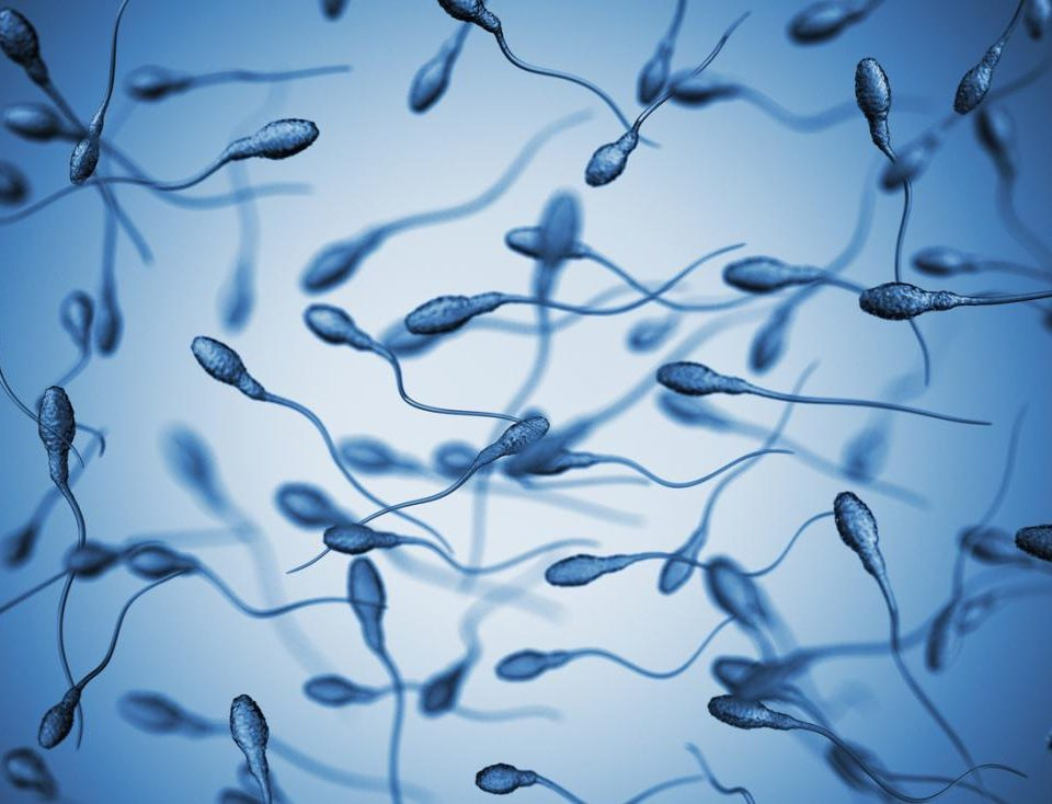 What sex are sperm